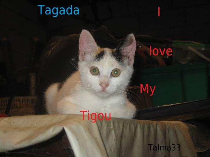Chat Tagada -  (3 mois)