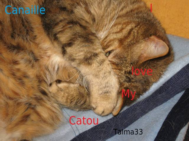 Chat Canaille -  (9 ans)