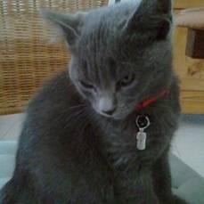 Nala, chatte de ma grand-mère - Chat (4 mois)