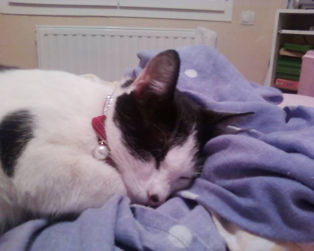 Nicky - Chat (4 ans)