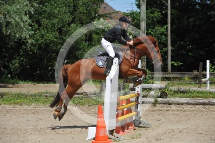 Photo cheval rigolo - Cheval rigolo ...