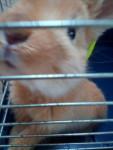 Ania - Grand lapin (5 mois)