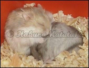 Sleep Time - Hamster