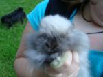 Lapin smokey -  (2 mois)