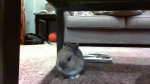Jack - Lapin Mâle (11 mois)