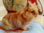 Lapin Bunny - Mâle (6 ans)