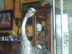 DISECADINA - Oiseau