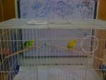 Oiseau 2 birds - Femelle (2 ans)