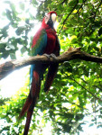 Oiseau Yogapapa -  (Vient de naître)
