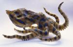 Poisson dily - Femelle (3 ans)