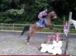 Poney 4ft spread bailey jumping - Femelle (9 ans)