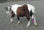 Poney my pony hope - Femelle (24 ans)