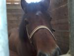 Poney Quad - Mâle (6 ans)