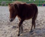 Poney Et Hop - Mâle (3 ans)