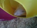 Fripouille - Rat (3 ans)