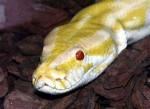 Albi - Serpent (3 ans)
