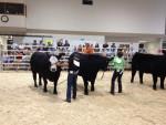 Vache Hopper - Mâle (6 mois)