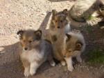 Dino, Pouchie et Patchy - Mâle (1 mois)