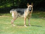 puppy - Mâle (6 ans)