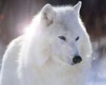 blanca - (10 ans)