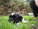 bébé de daizy - (1 mois)
