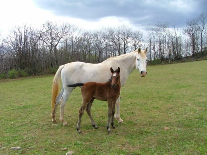 Comanche - (4 ans)