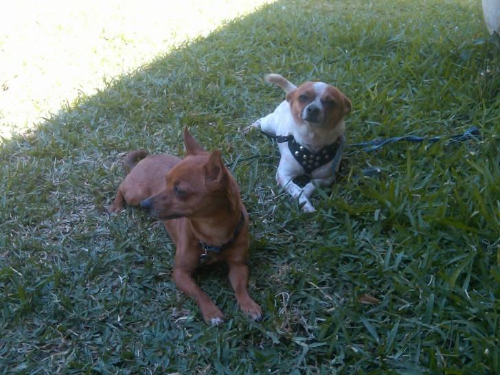 Cablin y Ringo - Mâle (2 ans)