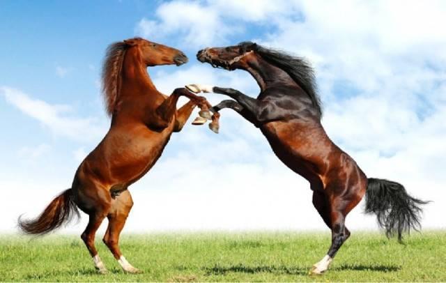 caballo - (3 mois)