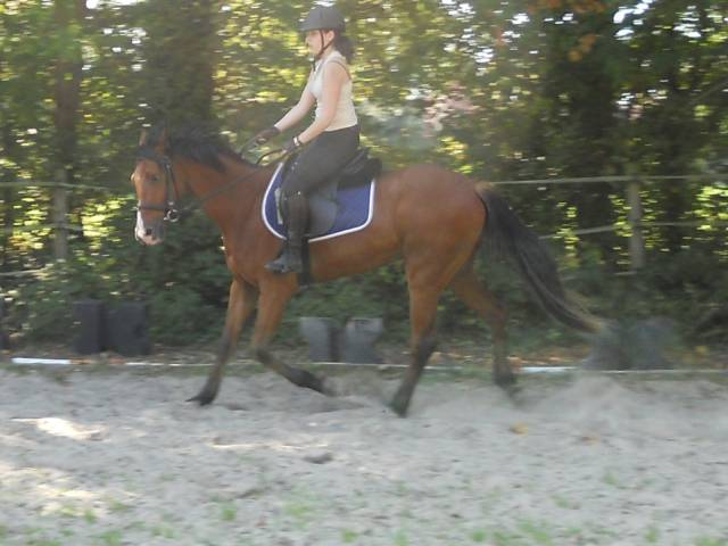 Ulysse - Mâle (4 ans)