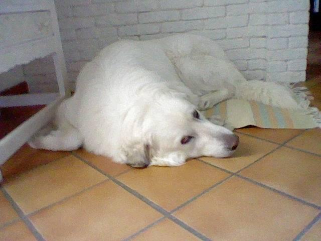 Abba - (4 ans)