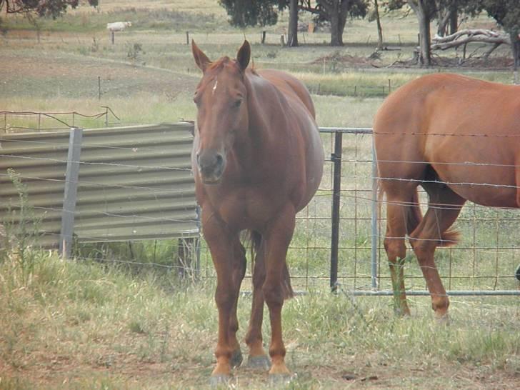 My Horse- Dylan - Mâle (13 ans)