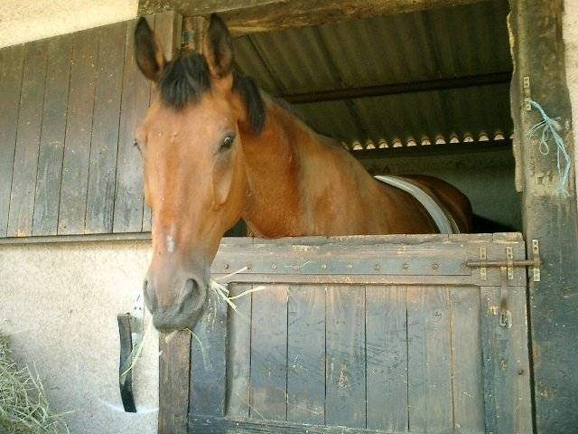 one-of - Mâle (4 ans)