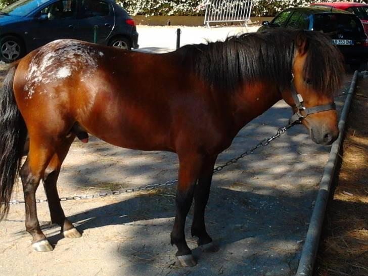 Ulysse - Mâle (9 ans)