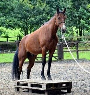 one of my other horses neo - Mâle (4 ans)
