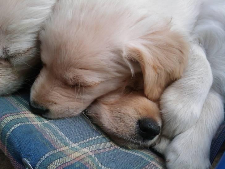 i miei cuccioli - (2 mois)