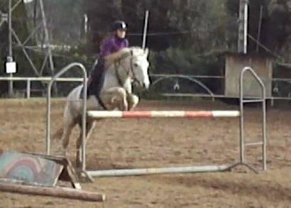 Obélix et moi puissance 1m10 - Mâle (11 ans)