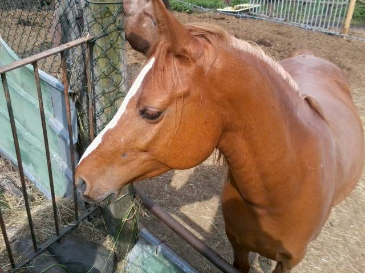 il mio bellissimo cavallo !! - Mâle (1 an)