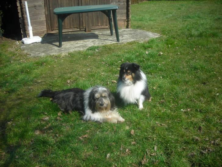 daxon et bandy - Mâle (9 ans)