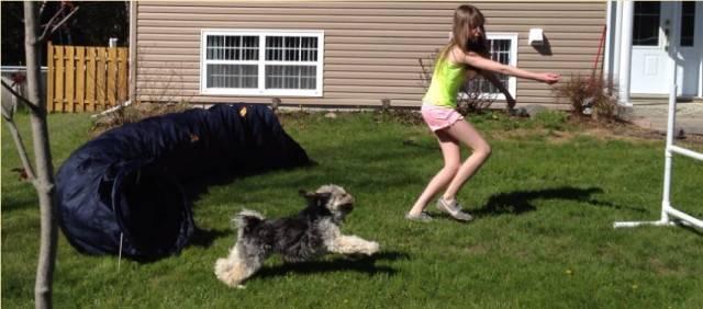 Chien Mickey et moi (agility) -  Mâle (4 ans)