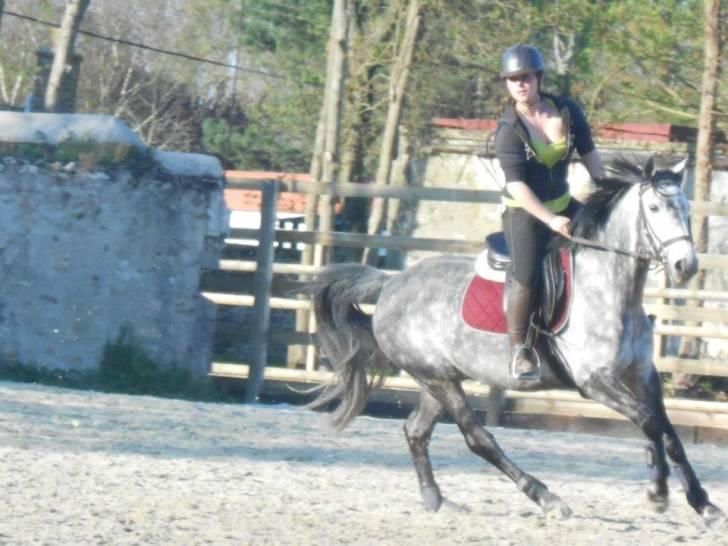 Qrystal - Mâle (9 ans)