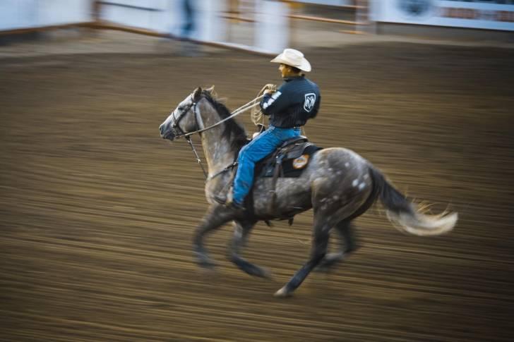 Quarter Horse - Mâle (5 ans)
