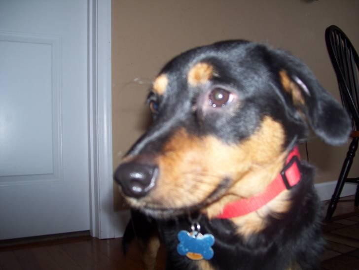 Toby - Mâle (4 ans)
