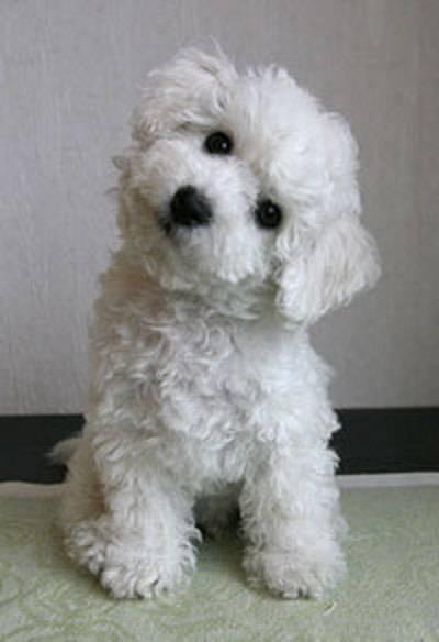 ugo - Mâle (6 ans)