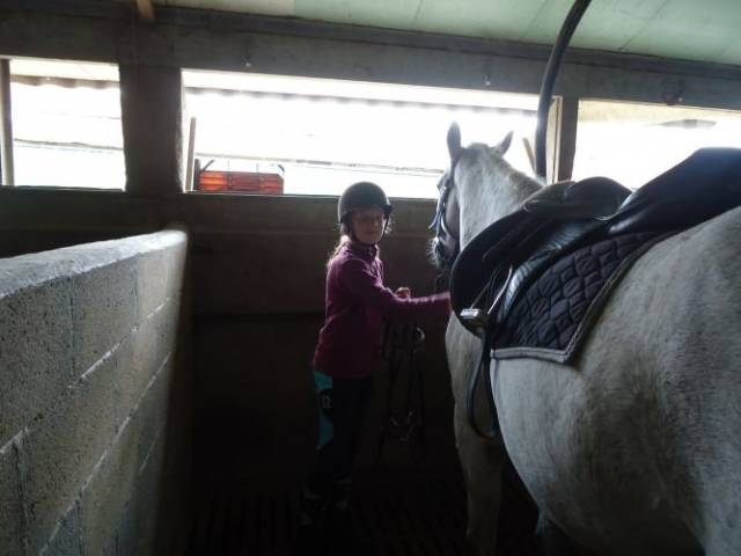 Hermes - Mâle (8 ans)