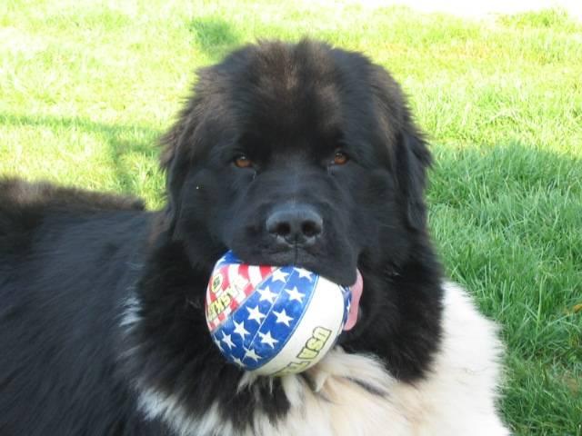 C'est mon ballon.... A moi!!! -