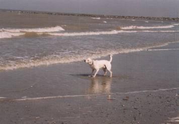 à la mer -