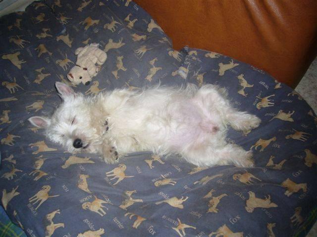 C'est dur la vie de chien -