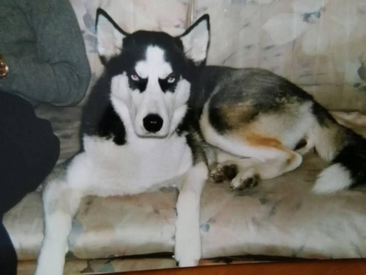 Liria - (2 ans)