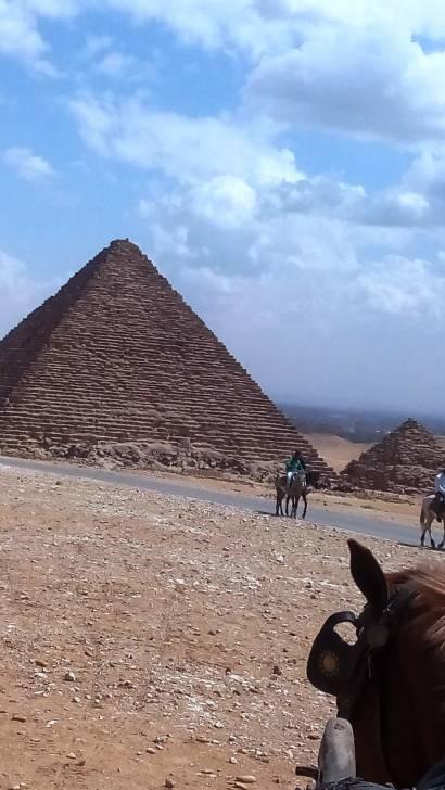 caballo - Mâle
