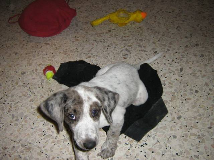 Mon chien - Mâle (2 mois)